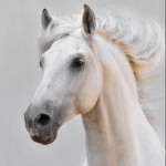Equimins Ltd Blog | Natural Horse Supplements, Supplies & Products